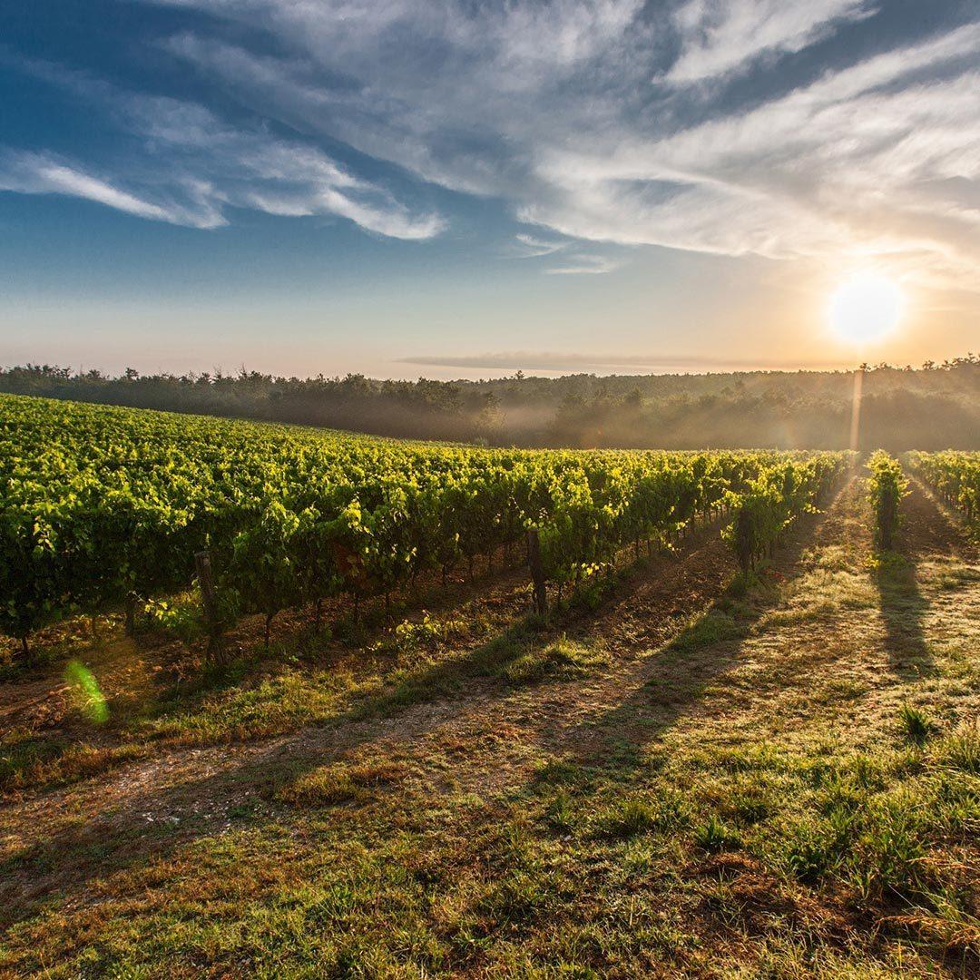 foto de agroecológico