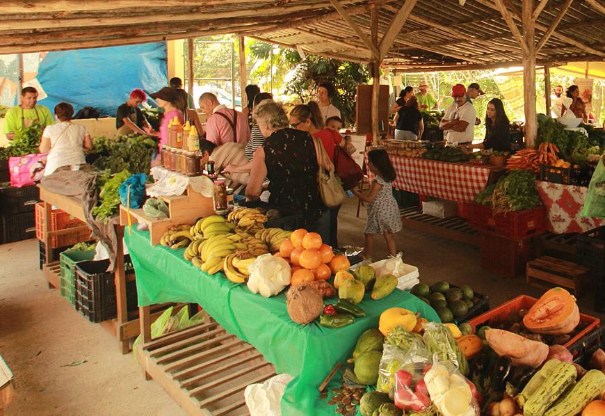 cesta de produtos agroecológicos